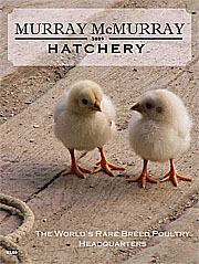 Murray McMurray Hatcheries catalog.
